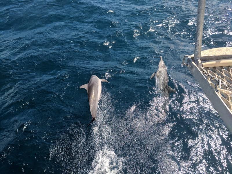aims dolphins cape ferguson