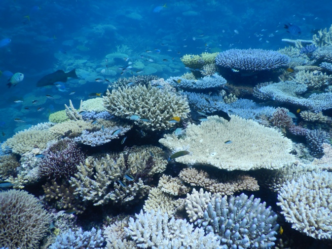 coral reef monitoring volunteering aims great barrier reef