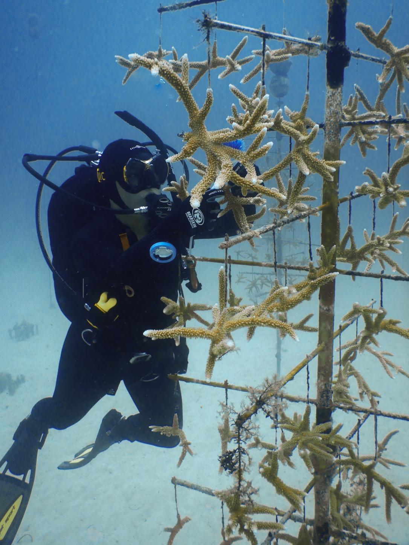 Fieldwork - Scuba - CRF - Coral Restoration